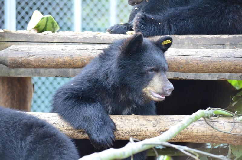 Critter Care Bear